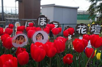 hohoemi-flower-bed.jpg